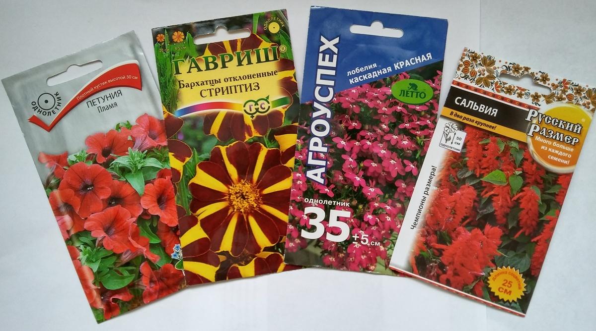 Каких цветов можно посадить на рассаду 194